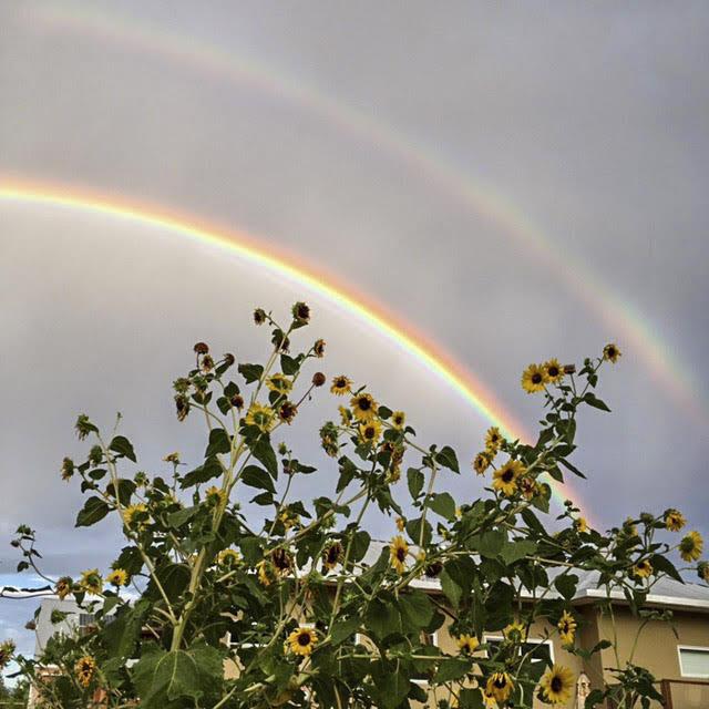 17.Dbl Rainbow