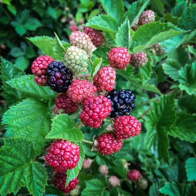 21. Berries-001