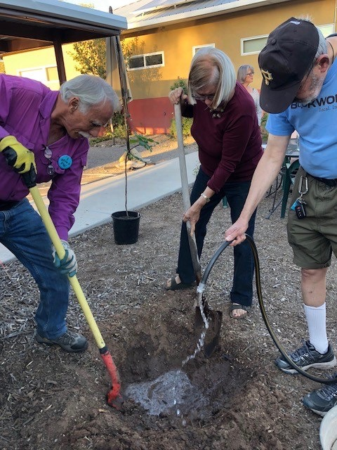 31. Fig Tree Planting